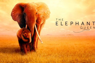 The Elephant Queen Apple TV+