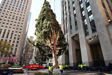 The Christmas tree at Rockefeller Center Plaza in New York City